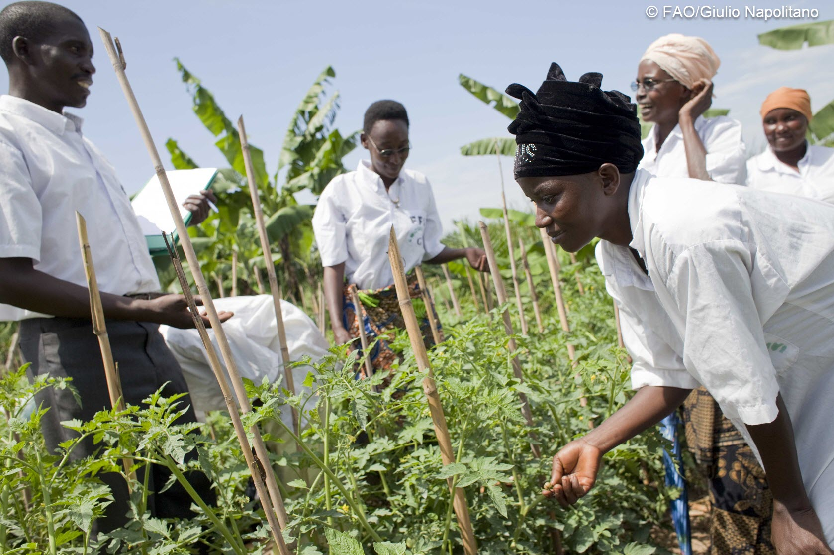 Case study: Using Dgroups for stakeholder engagement and participation in the FAO Farmer Field School